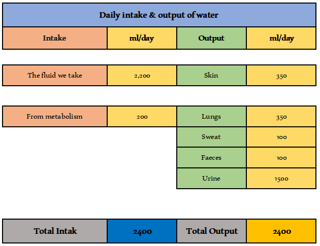 water intake and output