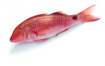 red mullet round fish